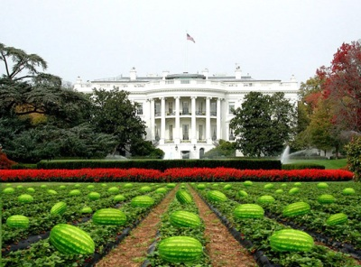 white house lawn as watermelon field